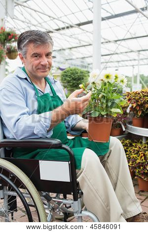 Garden center worker in wheelchair holding potted plant in greenhouse of garden center