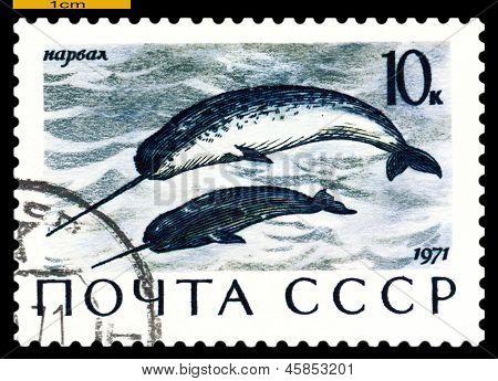Vintage  Postage Stamp.  Narwhals.