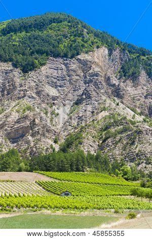 vineyards, Drome Department, Rhone-Alpes, France