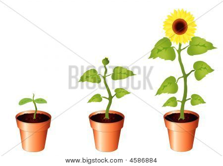 Sunflowers.eps