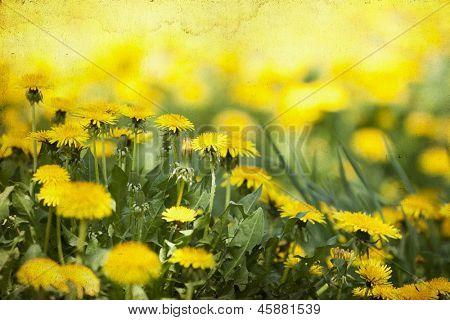 Vintage photo of summer field