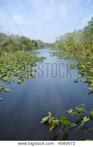 Lilypads At Evergaldes National Park