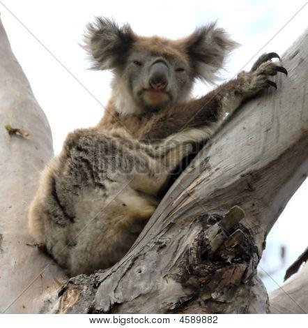 Koala 0924_