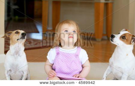 kleines Mädchen mit zwei jack Russell terriors