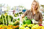 stock photo of showrooms  - Female florist or gardener in flower shop or nursery - JPG