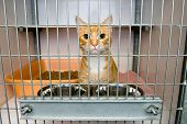 stock photo of homeless  - Homeless cat in a cage in an animal shelter - JPG