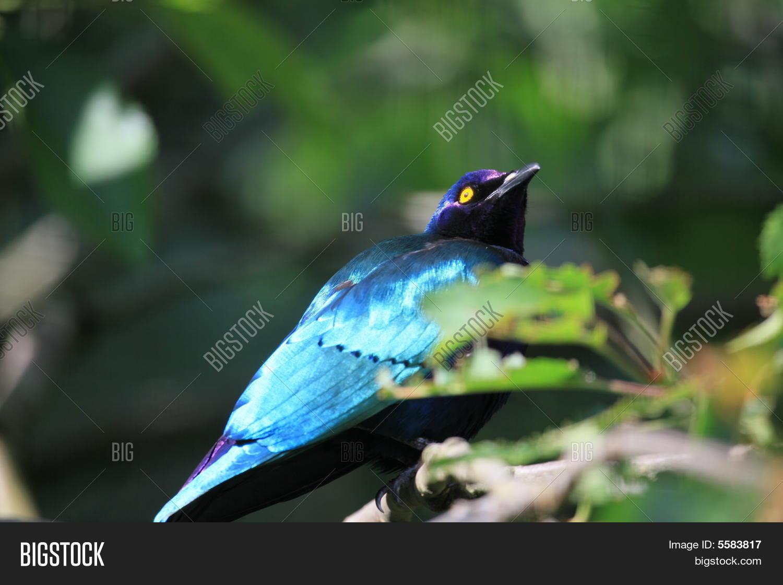 3f2b2c2fdf9ab http   www.bigstock.com.br image-5583670 stock-photo-homem-de ...