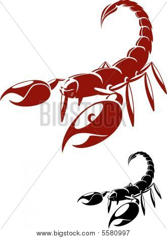 Isolated Scorpion In Danger Pose