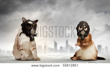 Cat and ferret in gas masks. Ecology concept