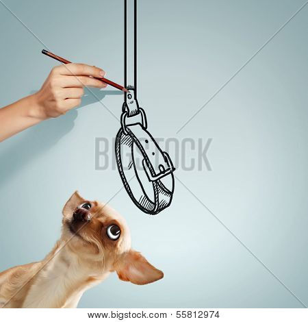 Image of little funny dog and human hand