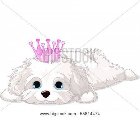 A cute white Havanese puppy with crown laying down