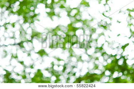 The Blur Background Of Green Leaves