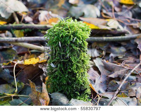 Clavaria Mushroom In Small Fern Plant