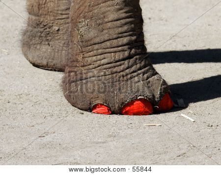 Fashionable Elephant