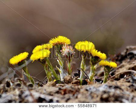 Flowerses coils foot