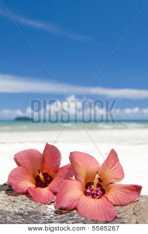 Two Flowers Hibiskus