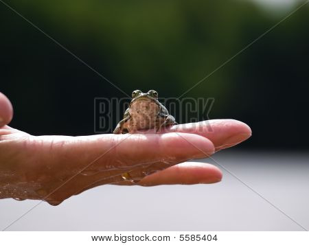 Frog On A Palm