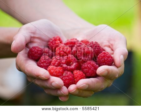 Handful Raspberries