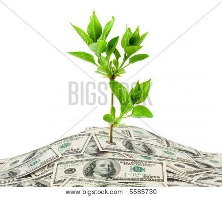 Geld und Pflanze