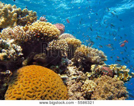 ein Korallenriff im Roten Meer