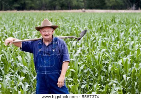 Farmer in the corn fields