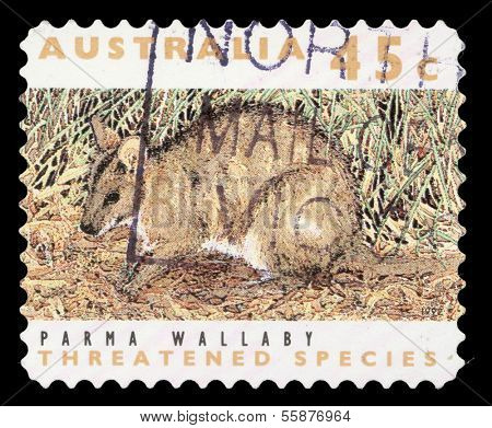 AUSTRALIA - CIRCA 1992: a stamp printed in the Australia shows Parma Wallaby, Macropus Parma, Marsupial Animal, circa 1992