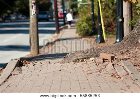 Tree Root Pushes Through Bricks Of Sidewalk In Urban Area