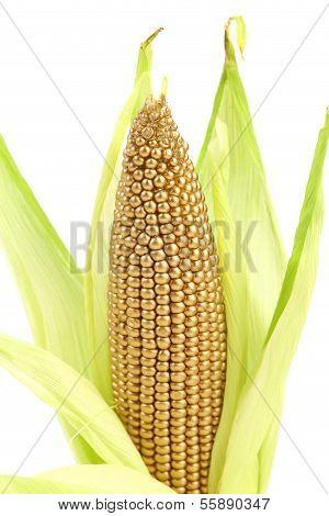 Golden corncob is among fresh leaves.
