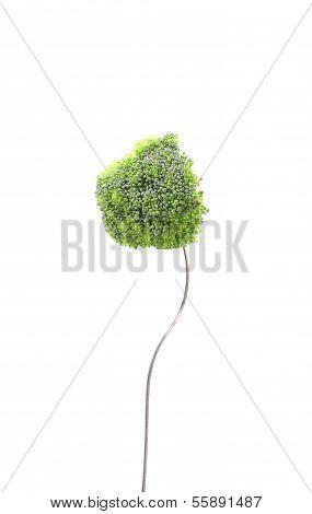 broccoli floret on a fork