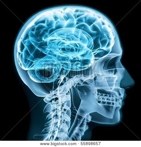 X-ray close up with brain and skull concept