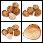 picture of lanzones  - Series collage lansium demesticum fruit on white background - JPG