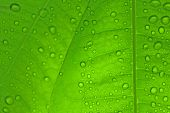 stock photo of green leaves  - detailed view of green leaves with water drops - JPG