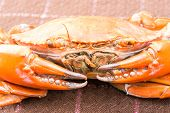 stock photo of cooked blue crab  - Hot Steamed crab and a red color - JPG