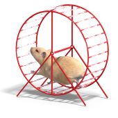 Cute Hamster In A Hamster Wheel