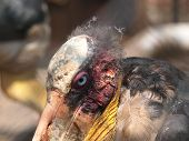 picture of peculiar  - Portrait of the peculiar looking Marabou bird - JPG