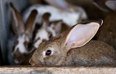 stock photo of rabbit hutch  - Young rabbit animal farm and breeding - JPG
