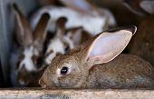 stock photo of rabbit hutch  - Young rabbit animal farm and breeding - JPG