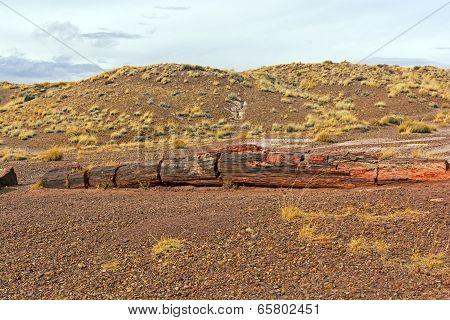 Petrified Log In The Desert