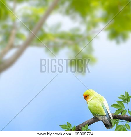 Parrot In A Branch On Blue Background