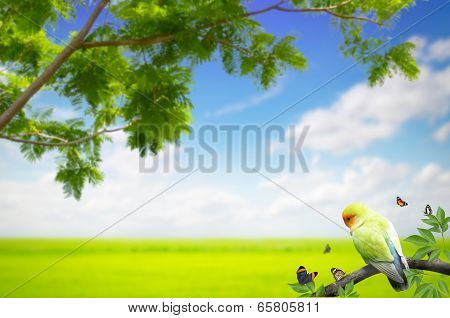 Parrot With Butterfly In A Branch On Meadow Background
