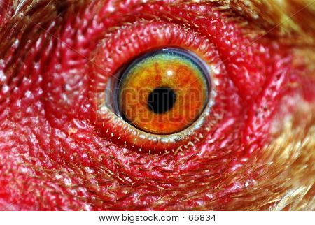Chicken Eye
