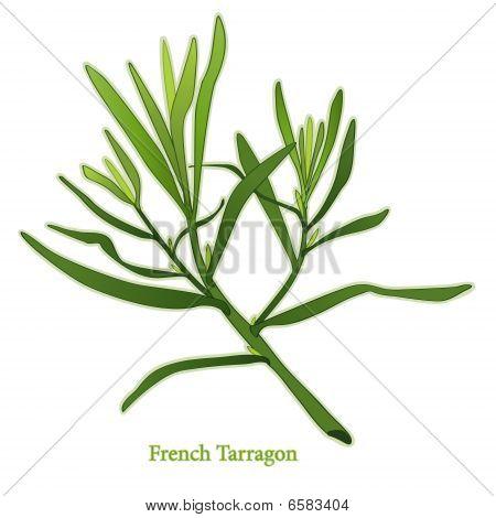 Fresh French Tarragon
