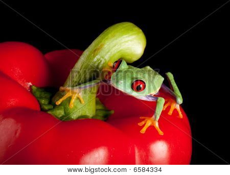 Red Eyed Frog On Pepper