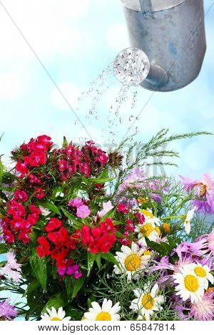 Water can watering flowers on bright background