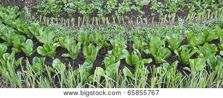 Grass And Vegetable Farm