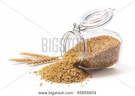 Wheat And Wheat Grains Into A Jar