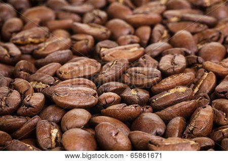 Big Arabica Coffee Beans
