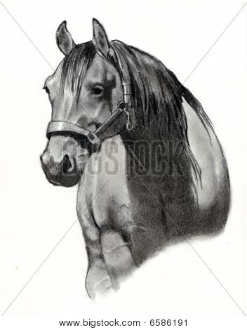 Pencil Drawing of  Horse Head
