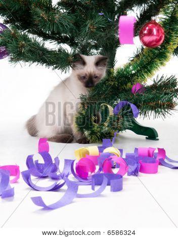 Kitten under the Christmas tree