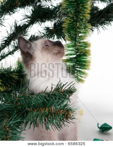 Kitten under the Christmas tree